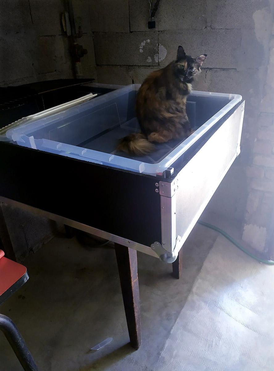 La Pounche Naika bain cyano
